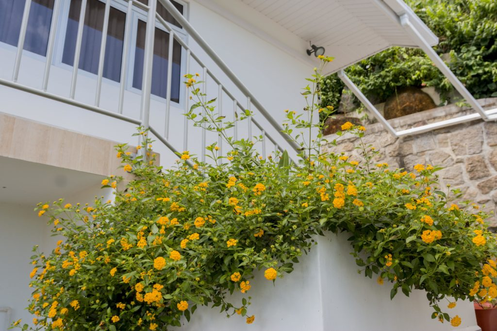 Le Manglier Guest House Seychelles Yellow Flowers Balcony