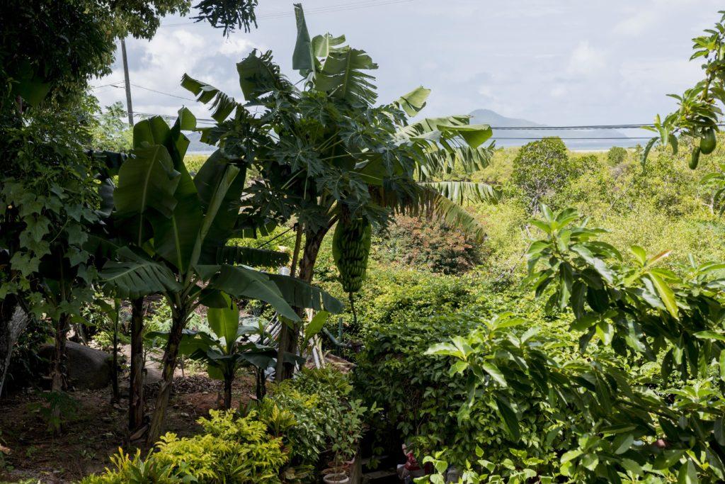 le-manglier-palms